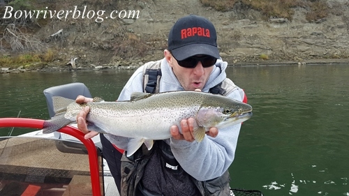 fall-fishing-for-bow-river-rainbows