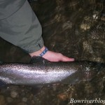 Bow River Rainbow Trout Fishing