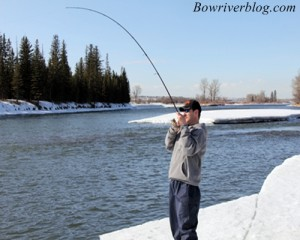 Winter Trout Fishing The Bow River 2011