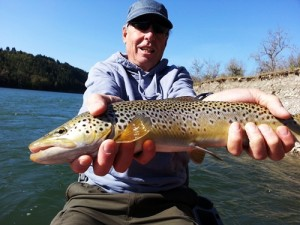 John lands a respectable bow river brown trout 2013