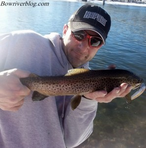 brown trout winter fishing the Bow River