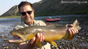 massive-brown-trout-caught-and-released-November-2015