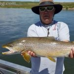 Bow-River-trout-fishing-july 2016