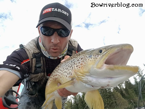 July spin fishing for brown trout Bow River