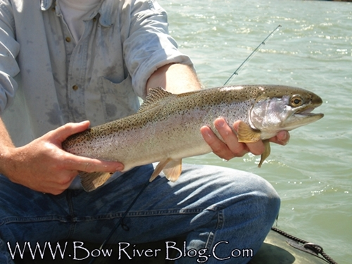 Trout Fishing Videos – Bow River Blog