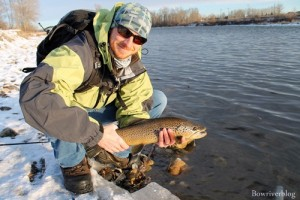 A colorful brown trout taken from the Bow River December 27 2011