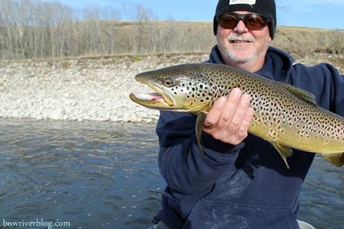 A massive Bow River brown trout