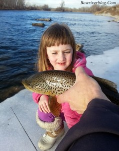 Bow River winter fishing 2014